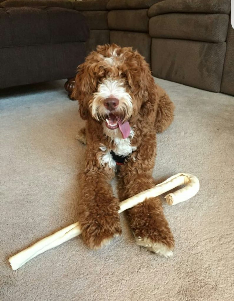 Goldendoodles And Australian Labradoodles For Sale